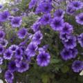 [Q02]花