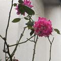 [Q02]花写真