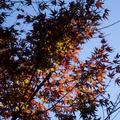 [Q06]紅葉