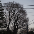 [Q06]植物写真