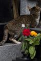 [Q01]猫写真