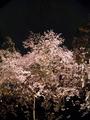 [Q03]夜桜