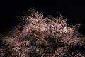 [Q01]夜桜