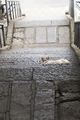 [Q01]猫と階段