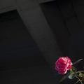 [Q01]花写真
