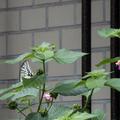 [Q6]植物写真