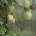 [Q6]植物