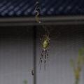 [Q06]蜘蛛