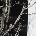 [Q06]すずめ