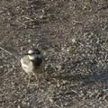 [Q06]鳥