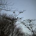 [Q06]鳥のいる風景