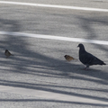 [Q06]鳥たち