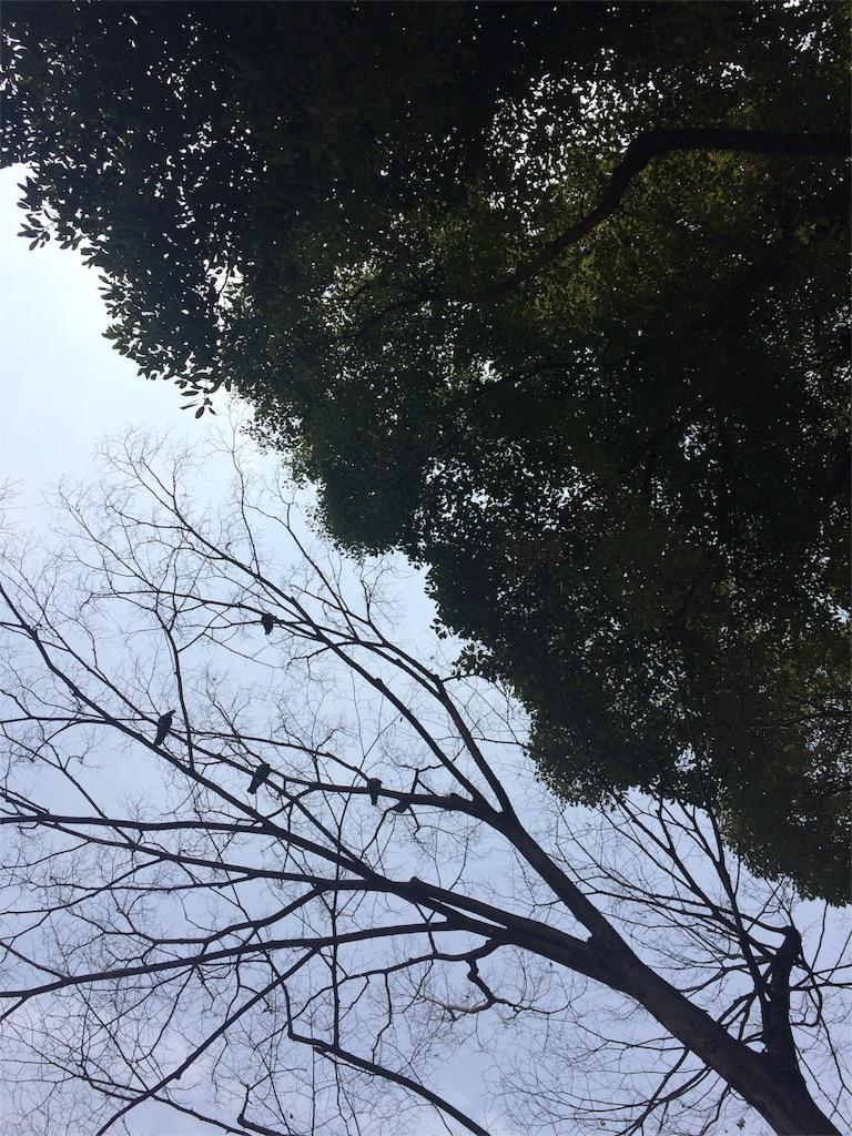 f:id:funbo-oyado:20170522162455j:image