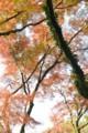 [つれづれ]秋月