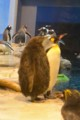 [Nature]ペンギンヒナ