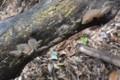 [Nature]キクラゲかな