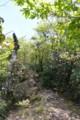 [Nature]犬ヶ岳シャクナゲの道