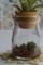 苔瓶とエアプランツ