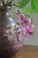 [Nature]アケビの花