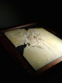 [Nature]大英自然史博物館展:始祖鳥