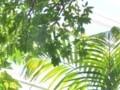 [つれづれ]植物園
