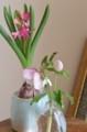 [Nature]春の花
