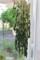 大根乾燥葉