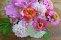 [Nature]庭の花