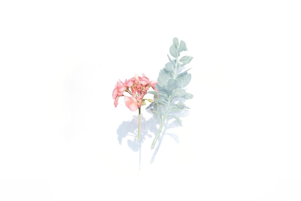 f:id:funk45rpm:20190219131958j:plain