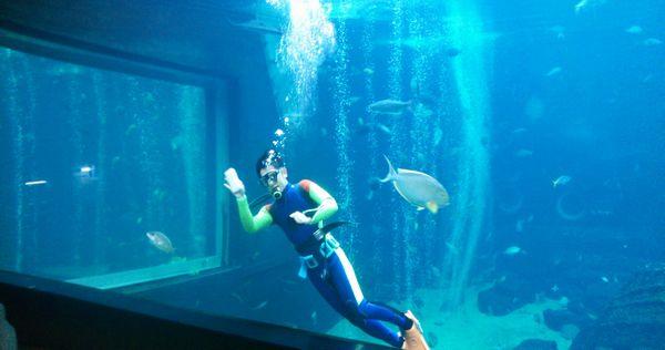 箱根園水族館水槽内掃除