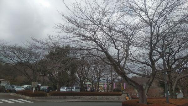 絶景富士山まるごと岩本山