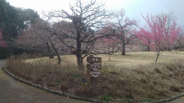 岩本山公園梅園