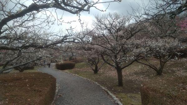 岩本山公園梅園2