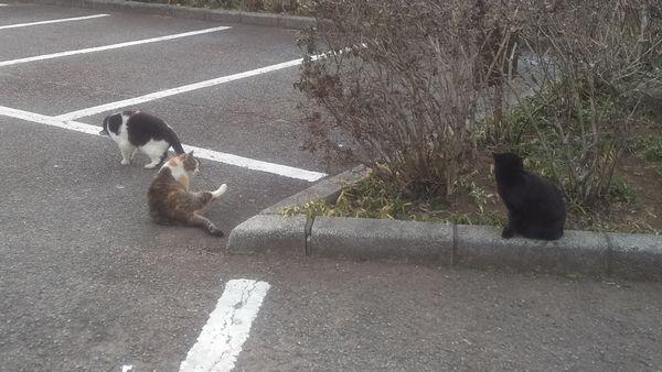 岩本山公園の野良猫