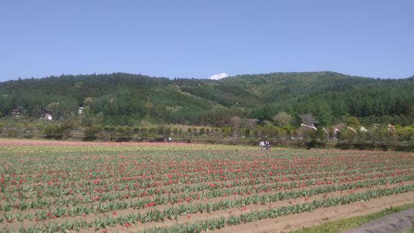 山中湖花の都公園のどか