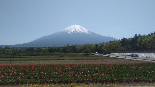 山中湖花の都公園富士山