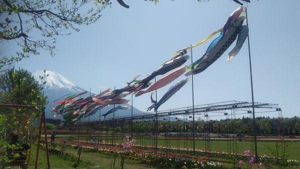山中湖花の都公園こどもの日鯉のぼり