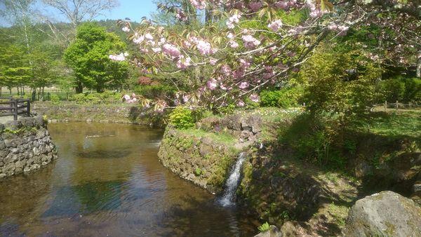 山中湖花の都公園有料エリア散策