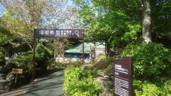 山中湖花の都公園溶岩樹型