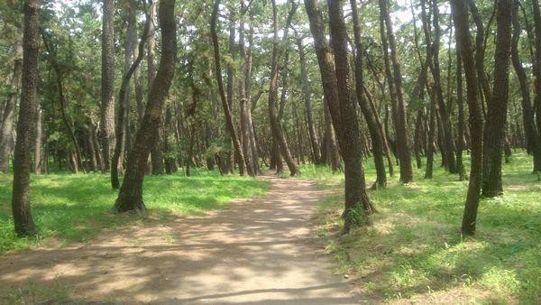 千本浜公園散策