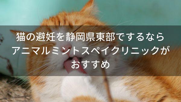 猫の避妊を静岡県東部でするならアニマルミントスペイクリニックがおすすめ
