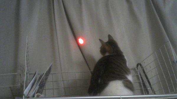 じゃれ猫 LEDにゃんだろー光線距離1m