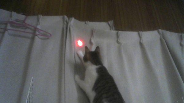 じゃれ猫 LEDにゃんだろー光線