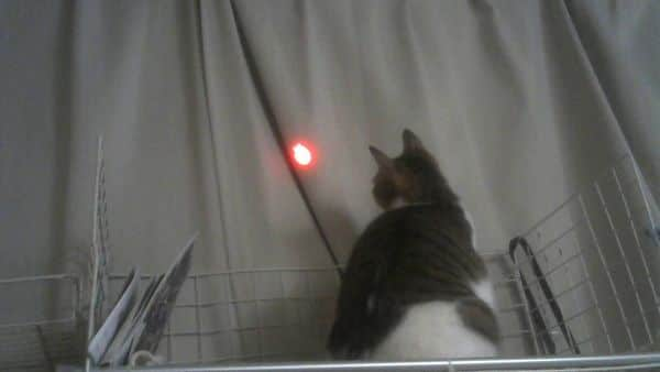 にゃんだろー光線猫の反応