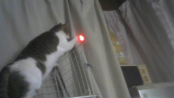 にゃんだろー光線猫の反応は上々