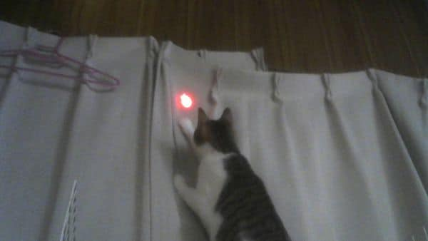 にゃんだろー光線の猫の反応はばっちり