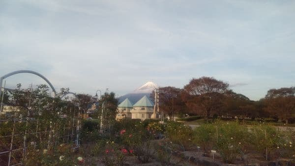 富士中央公園富士山とバラ