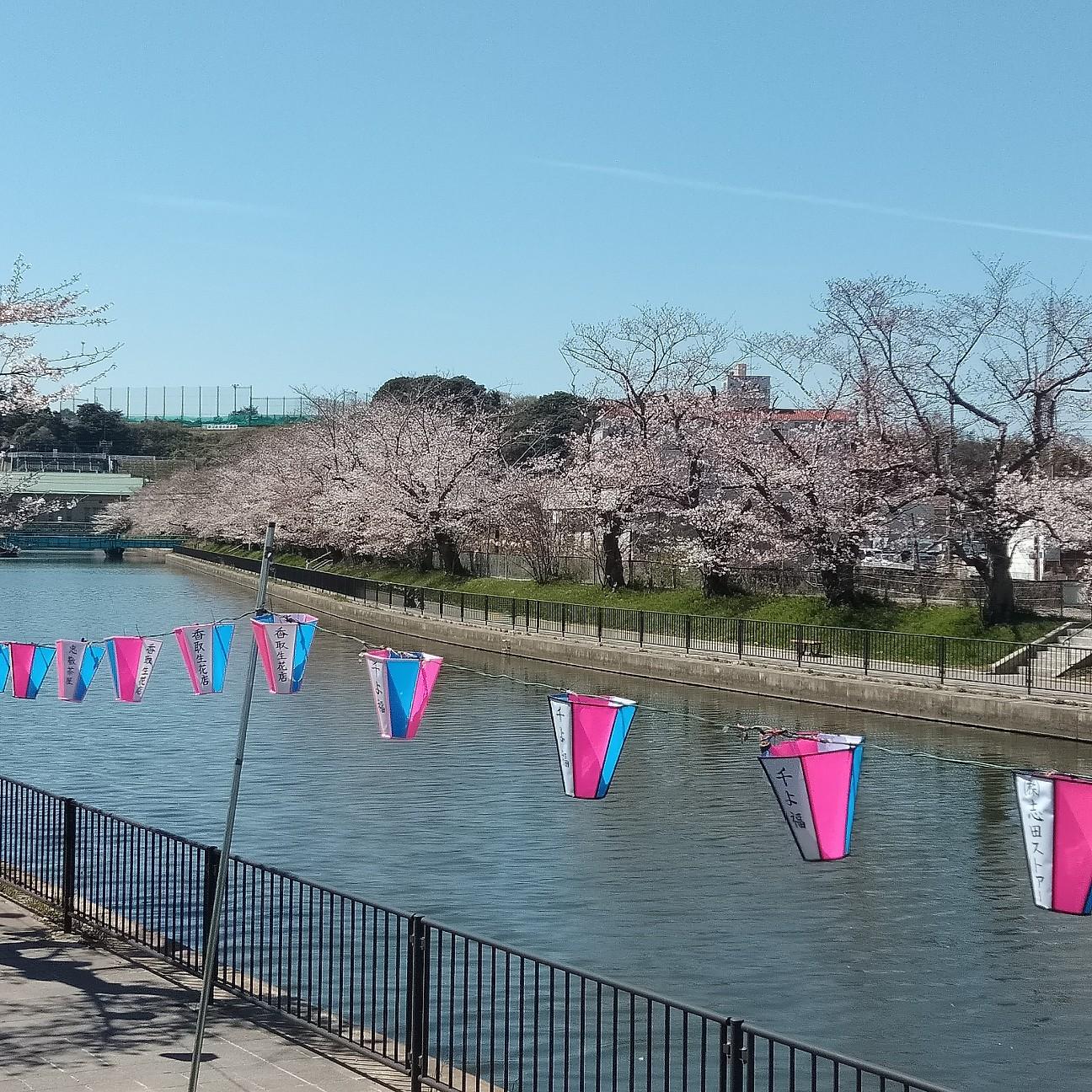 f:id:furasuke:20190404105859j:image