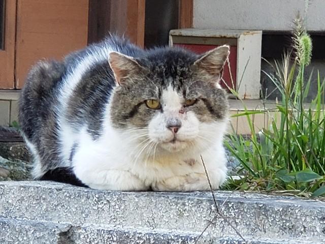 f:id:furesuburasut:20201201234603j:plain