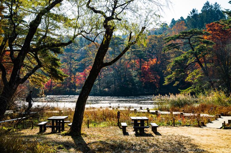 神戸市立森林植物